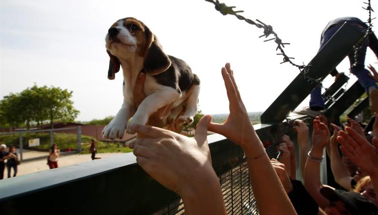 In ricordo di Vita, cagnolina simbolo della storica vittoria su Green Hill