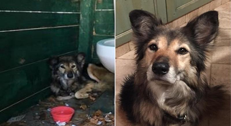Torna a casa Bonnie: ritrovata cagnolina smarrita per i botti di Capodanno
