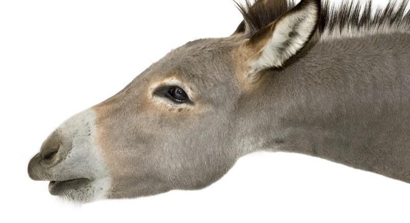 Chi maltratta gli animali, paga davvero?
