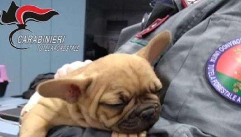Salvini: traffico cuccioli, pronti a inasprire pene e controlli