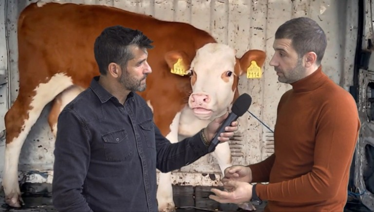 Stop live animals export! On the Italian TV, shocking evidence of brutal treatment, filmed by Animals International