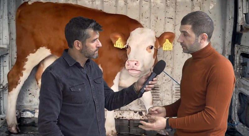 Basta export animali vivi: inchiesta Striscia nata da video-shock diffusi da LAV e CIWF