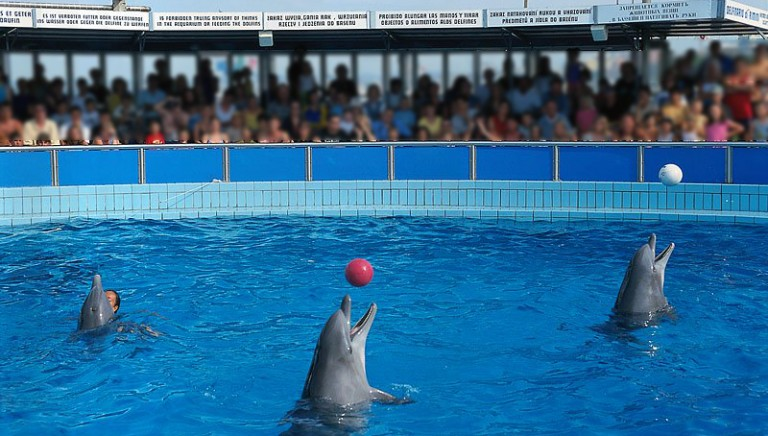 Dolphinarium Rimini: director and veterinarian guilty of animal abuse