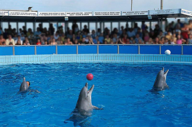 Delfinario Rimini: direttore e veterinaria condannati per maltrattamenti animali