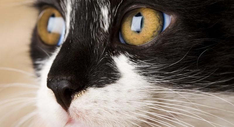 Perugia, gatto scuoiato: imputato condannato in Appello