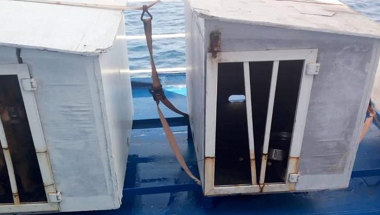 Scomparso cane su traghetto Siremar che non permette il trasporto in cabina