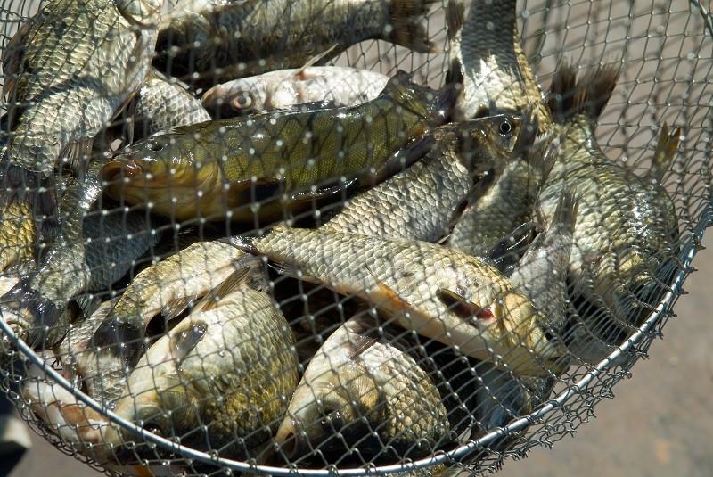 Colpo di mano in Parlamento, ridotte le sanzioni per la pesca di frodo