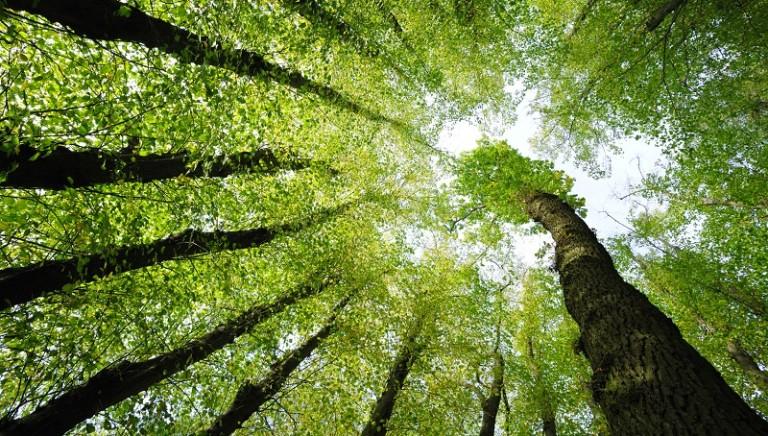 Laudato sì. Un'alleanza per il clima, la Terra e la giustizia sociale: il documento