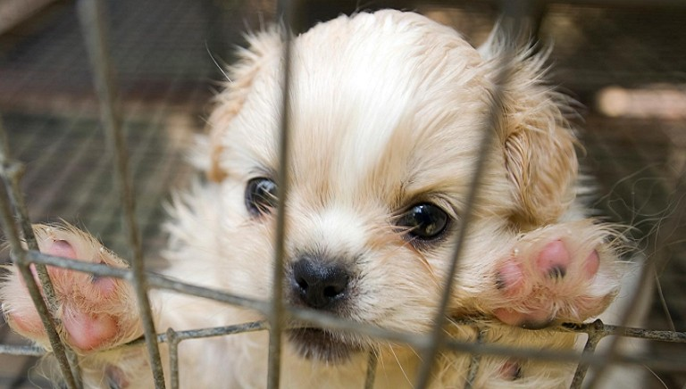 Traffico cuccioli, nuova vittoria! Cassazione conferma condanna
