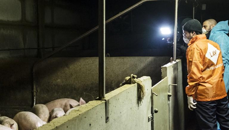 """""""La porcata"""": stasera inchiesta-choc di REPORT con i nostri investigatori"""