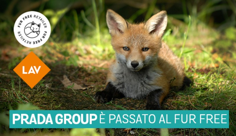 Victory: also Prada group with LAV. Fur free from 2020!