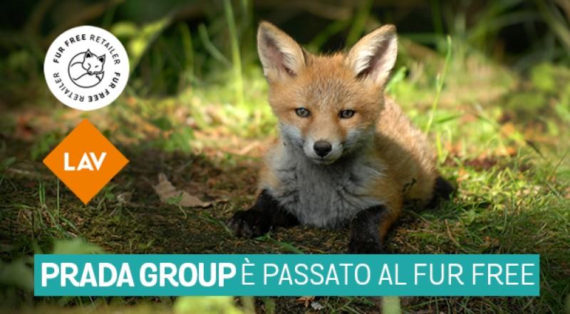 Vittoria: anche il Gruppo Prada con LAV. Fur free dal 2020!
