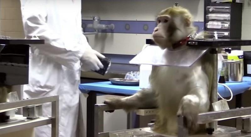 (C) Immagine tratta dall'investigazione di essere Animali in una Università italiana