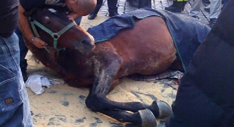Botticelle, si vota in Commissione alla Camera. No alla sofferenza dei cavalli!