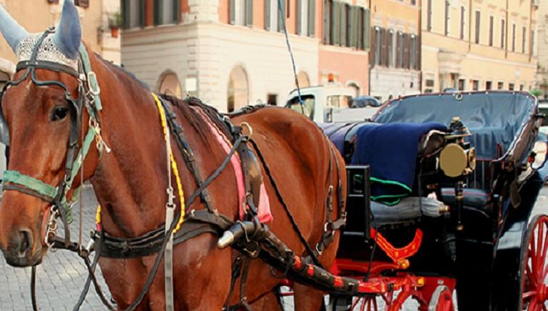 Botticelle: aggressione a Presidente Commissione Ambiente Comune Roma