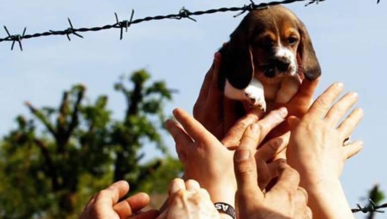 Green Hill bis, Corte d'Appello ribalta sentenza: condannato veterinario Asl