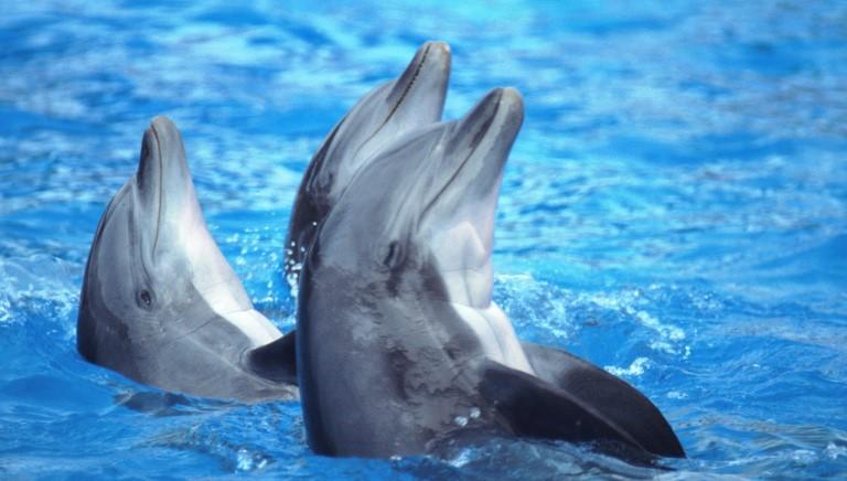 Nuoto nei delfinari, ripristinato divieto. Il commento dell'avv. Campanaro