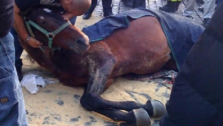 Botticelle: dalle strade ai parchi, ma non è ancora stop a sofferenze cavalli
