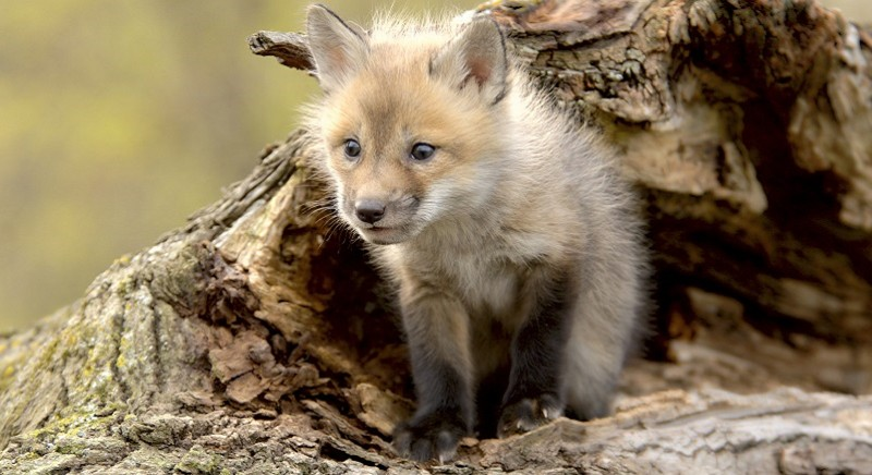 Dopo il passaggio al Fur-Free, Furla dice NO anche a lana mohair e angora