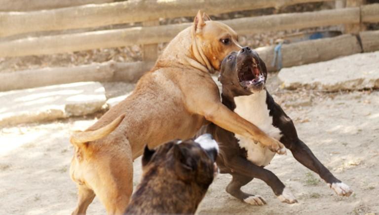 Rapporto Zoomafia LAV 2019: ogni 55 minuti un fascicolo per reati su animali