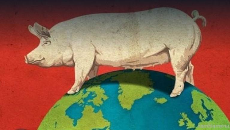 Soyalism: inchiesta sulla distruzione. Lo diciamo da anni: l'unica via di salvezza è l'alimentazione 100% veg