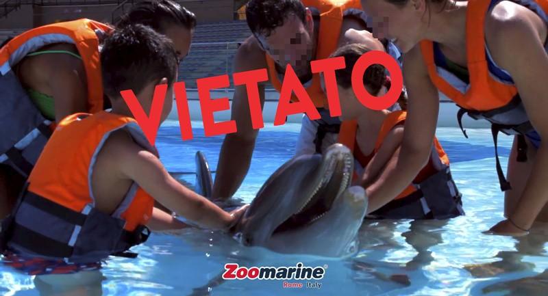 Zoomarine battuta 2 a 0, Consiglio di Stato conferma sentenza TAR Lazio: niente nuoto con delfini