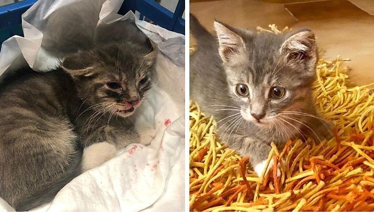 #CHIMALTRATTAPAGA: gattino preso a calci, veterinaria sporge denuncia