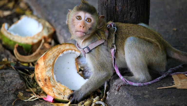 Il cocco è davvero una scelta alimentare etica?