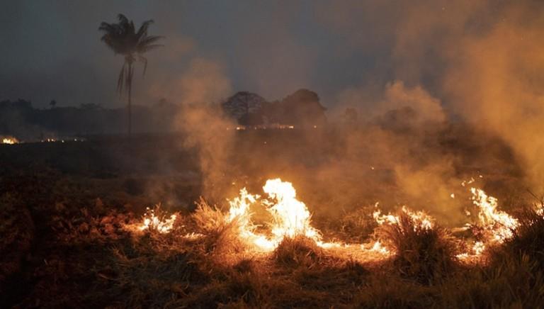 Quel consumo di carne che fa bruciare l'Amazzonia: il mondo ora ne parla