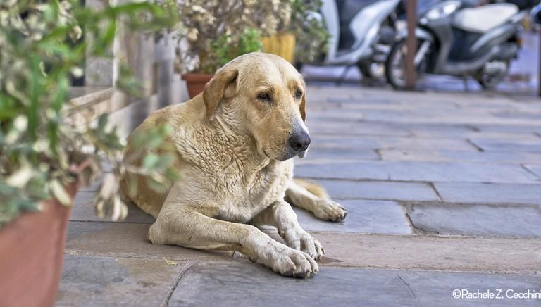Lampedusa, morto il cane Angelo. Se avvelenato il responsabile rischia 2 anni