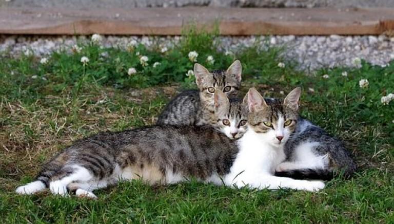 Uccise i tre gatti della compagna: condannato a 1 anno e 6 mesi