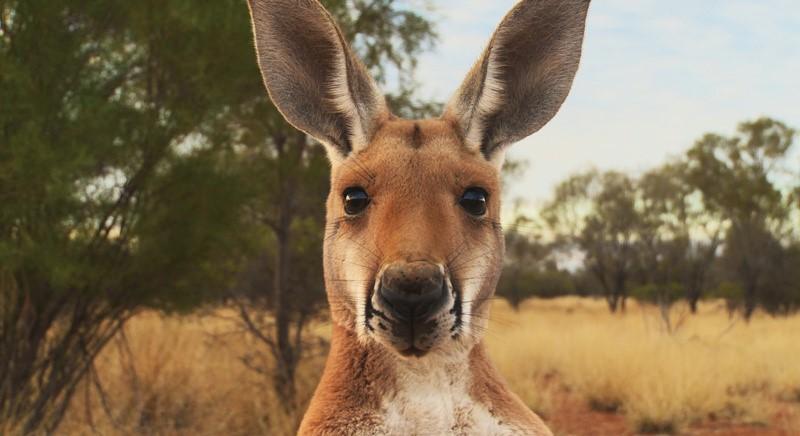 Kangaroos: the italian brands involved in the massacre