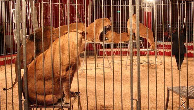 Ministro Franceschini: si a superamento uso animali nei circhi!