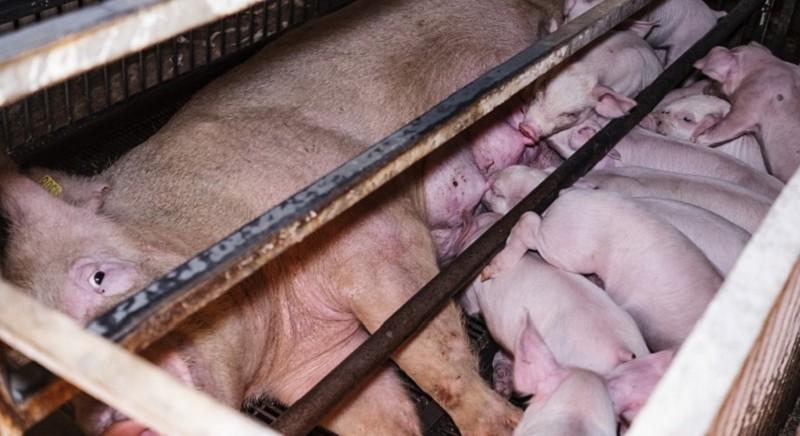 LAV nel nuovo Comitato ministeriale per la nutrizione e la sanità animale