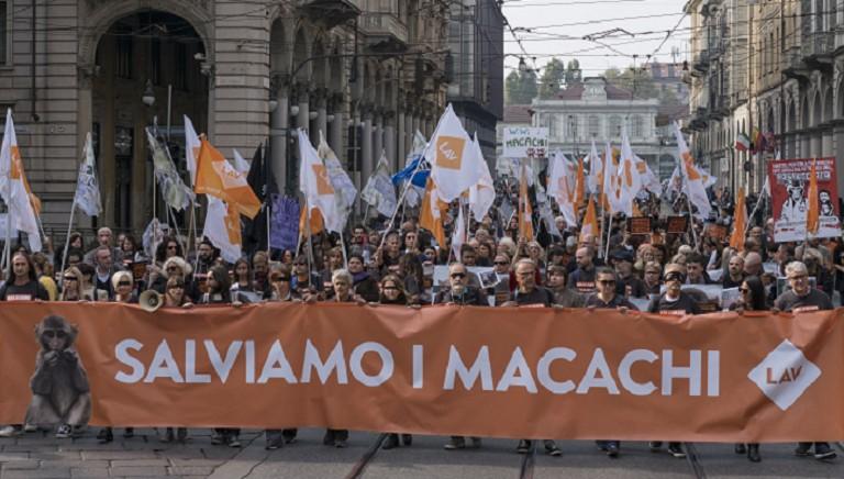 La sperimentazione sui macachi di Torino e Parma arriva a Bruxelles