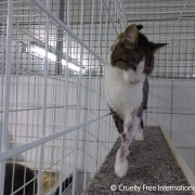 (C) Cruelty Free International / SOKO Tierschutz
