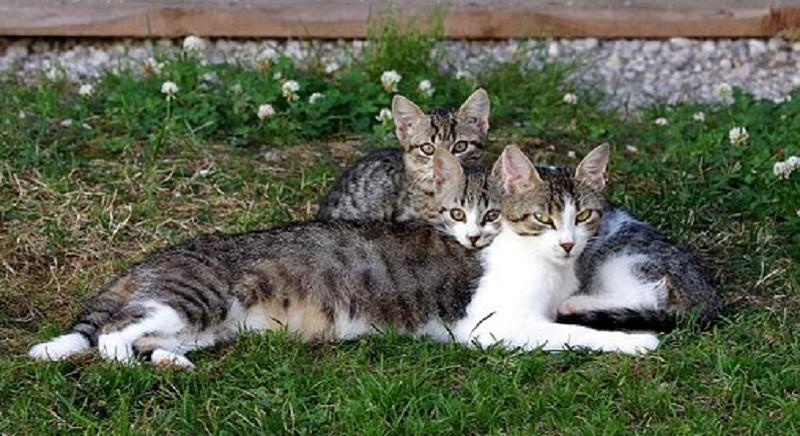 Sterilizzazione colonie feline: bilancio positivo per il progetto di  LAV Mantova