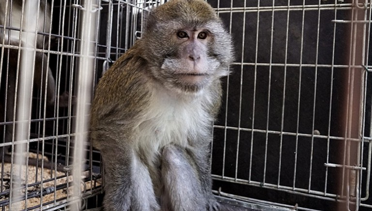 Una scienza senza test animali è possibile? Tre domande al Dott. Cagno