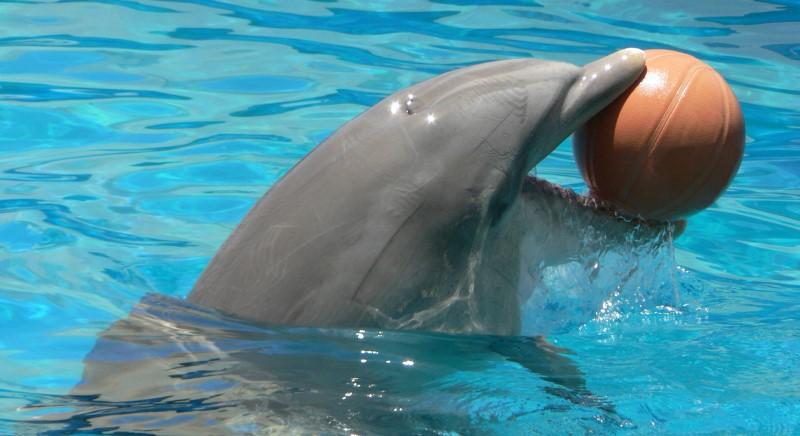 """Annunciata """"delfino-terapia"""" a Messina. È contro le normative, non si può fare!"""