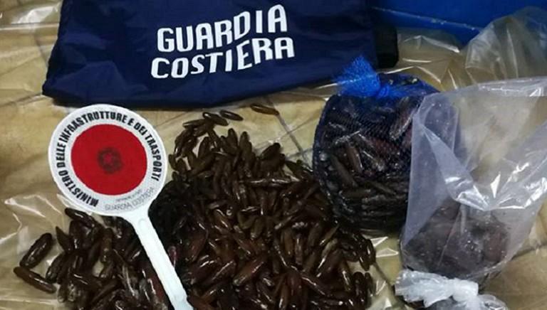 A REPORT la pesca di datteri di mare: è illegale e distrugge l'ecosistema