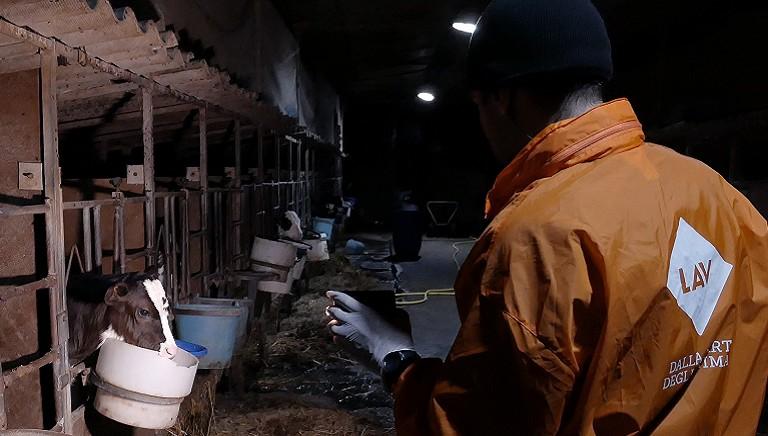 """Denunciamo l'orrore in un allevamento di mucche """"da latte"""": scatta il sequestro"""