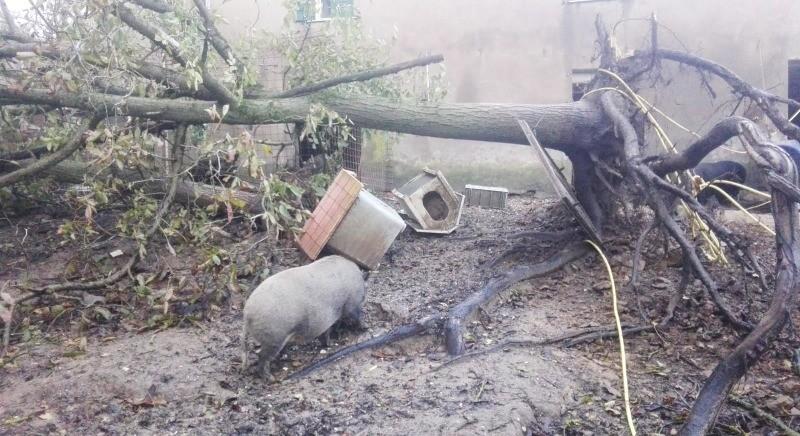 Bufera colpisce il Rifugio Vallevegan: salvi gli animali, seri danni alle strutture