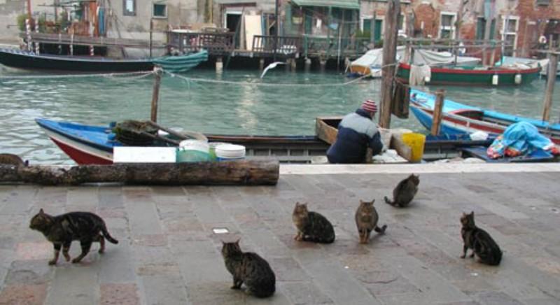 Acqua alta Venezia, in partenza cibo destinato alle colonie feline