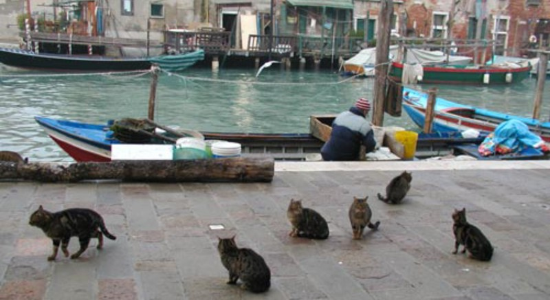 Acqua alta Venezia, un quintale di cibo destinato alle colonie feline