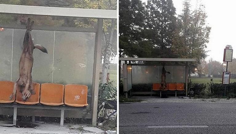 Lupo impiccato a Rimini: condannati i tre imputati, ma non è un caso isolato!