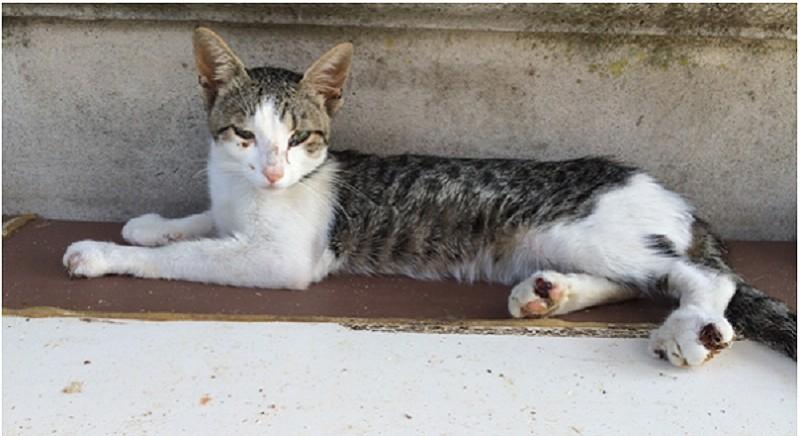 Uno degli animali del rifugio sequestrato nel 2015