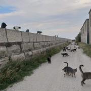 Una colonia felina di Pellestrina