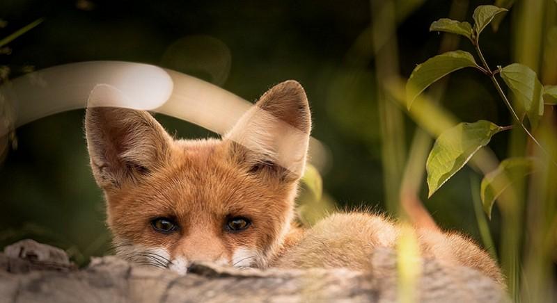 Legge Bilancio: bocciare emendamenti pro-caccia, intervenga il Governo!