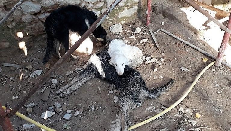 Murati vivi e destinati a morte: LAV Verona salva una famiglia di 5 cani