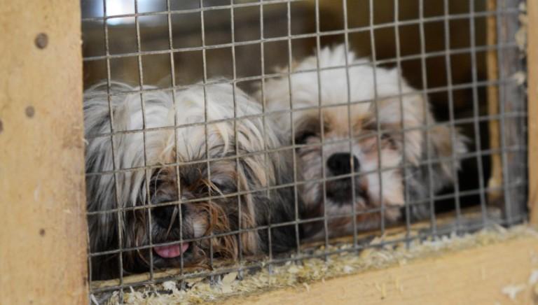 Traffico cuccioli: a Natale, e tutto l'anno, l'amore non si compra, si adotta!